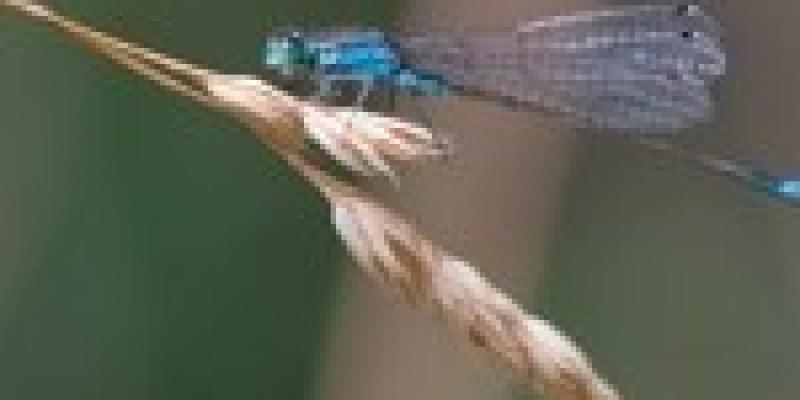 De létang à la lisière du marais : voyage au fil de leau