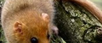 Sur la piste des mammifères à Rougé Rougé