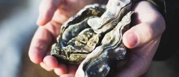 Visite et dégustation d\huîtres Les Moutiers-en-Retz