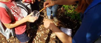 Activité enfants 5/12 ans «Course aux insectes» Pornic