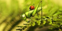 Festival Marmaille : Minuscule, la vie privée des insectes Rennes