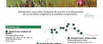 Balade contée dans les marais Saint-Père-en-Retz