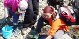 A la découverte du petit monde à marée basse Erquy