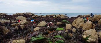 Sortie Algues Sibiril