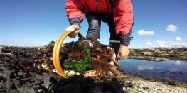 Bien être Origin' Algues Trébeurden