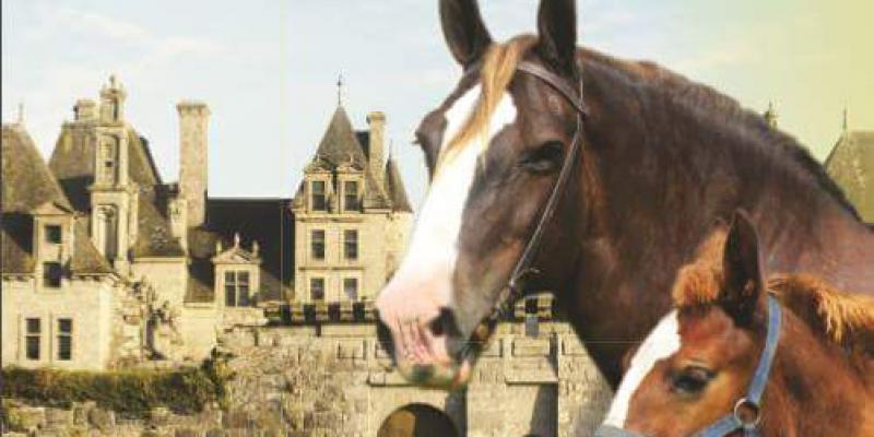 Concours départemental dattelages du cheval breton