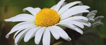 Sortie nature - Plantes qui se mangent et qui guérissent Lanvallay