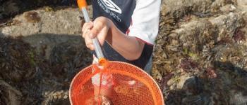 Sortie pêche à pied Plouha