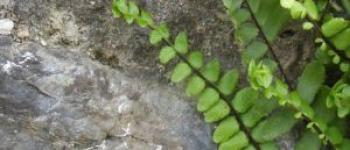 Balade nature Laurenan