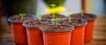 Foire aux plantes Saint-caradec