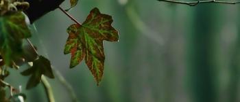 Sortie nature - Les mystères de la forêt la nuit Lanvallay