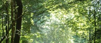 Les Mille et Une Histoires en Forêt d\Avaugour Saint-Péver