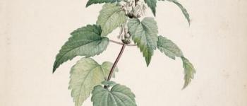 Balade : l\usage des plantes en automne Mellionnec
