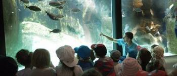 Exposition Les coulisses de l\Aquarium Marin de Trégastel Trégastel