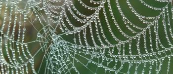 Exposition - Au fil des araignées Tréfumel