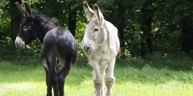 Aprés-midi en famille avec les ânes
