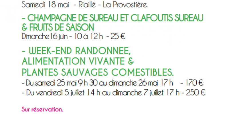 Week-end plantes sauvages comestibles et alimentation vivante