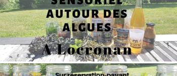Atelier sensoriel autour des algues Locronan