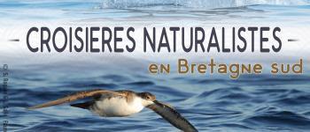 Croisière dauphins et faune marine de bretagne Concarneau
