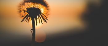 Balade nature aux aurores Pluherlin