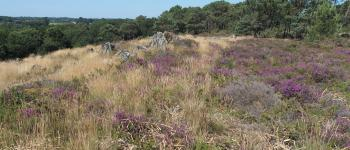 Balade nature - Les Grées de Lanvaux Pluherlin