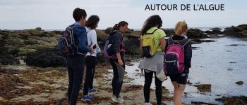 Trek-rando gourmand autour des algues Concarneau
