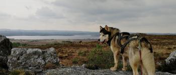 Cani rando, la randonnée ludique et originale, tractée par un husky Brasparts